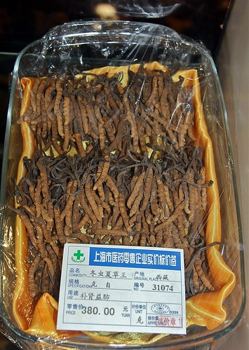 Ophiocordyceps sinensis on Thitarodes sp. caterpillars used as a traditional medicine