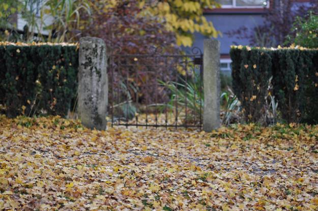 leafy-gate
