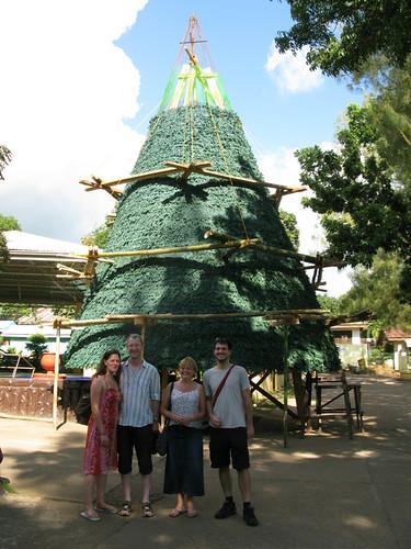 Philippino Tree
