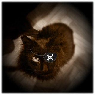 Pirate kitty wants his dinner #crazy #cat