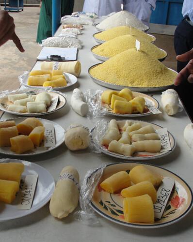 A display featuring yellow cassava and gari (cassava flour). Photo: Peter Kulakow, IITA