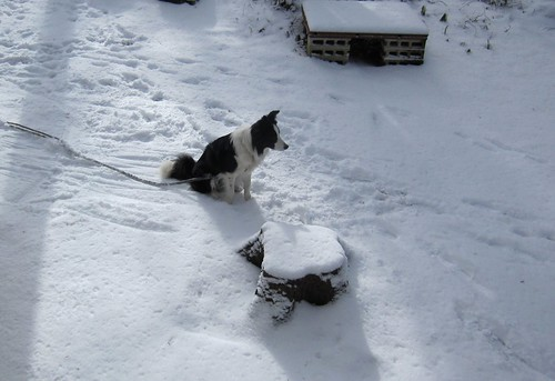 冷たい雪の上に座って車をチェック by Poran111