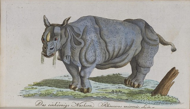 Rhinoceros sketch (absurd)
