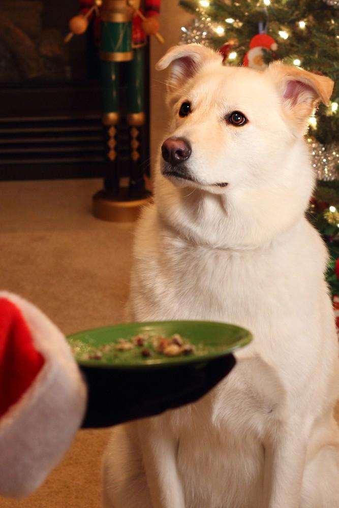 Christmas Photos - Part 3
