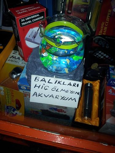 A soha-ki-nem-haló-halak-akváriuma