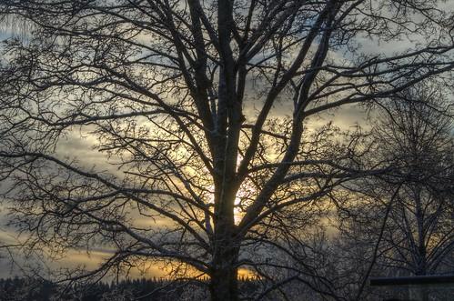 winter tree sunrise finland fi kuopio