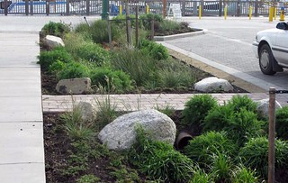 green infrastructure softens hardscape while managing stormwater (courtesy of SVR Design)