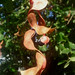 Small photo of Adenanthera pavonina , Red Sandalwood Tree
