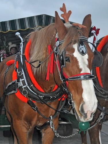 Reindeer Horses