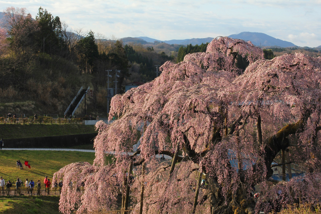FukushimaMiyagi Report (22)