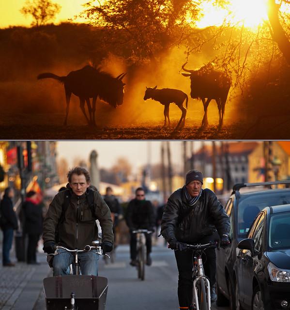 Copenhagen Bikehaven by Mellbin 2011 - 2962