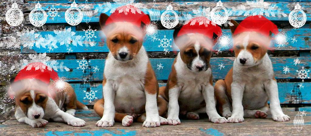Merry Chrismas! Feliz Navidad! С Рождеством Христовым! Buon Natale!