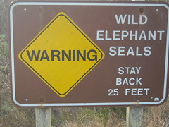 Elephant Seal Sign