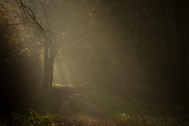 Waldweg im Morgendunst