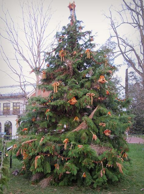 Wildlife Tree At Longwood Gardens 1 1 12