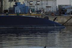 黒い鳥と潜水艦