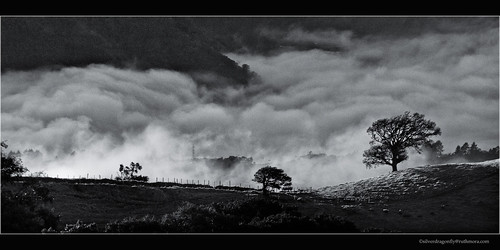 morning light mist cold tree fog sunrise landscape costarica wind bruma matutinas
