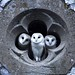 Church-owls on their geometrical hideup by Guido Jan