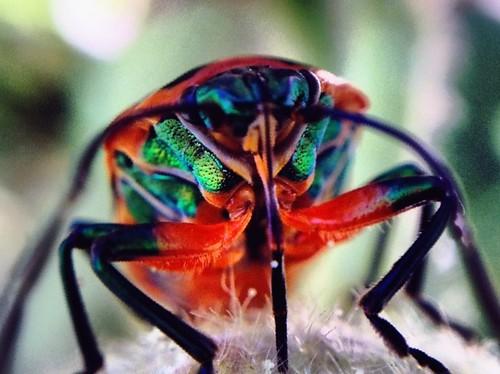 Beetle aglow