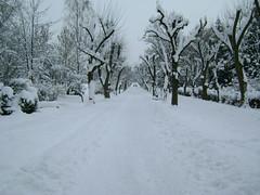 zăpezile de altădată/the snows of yesteryear/les neiges d'antan
