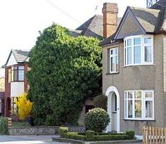Chelmsford+ivy