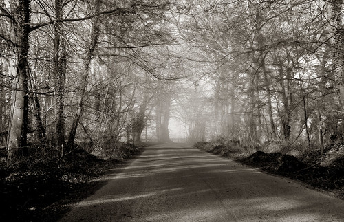 Winter Road, Co Kildare, Ireland.