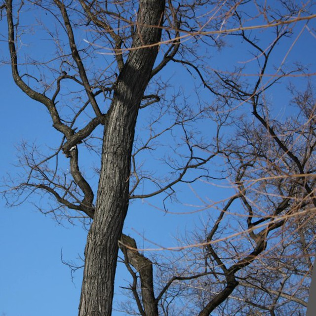 Branches i CentralPark, 106 011.jpg