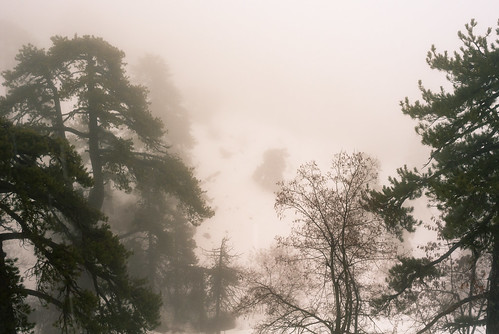 Foggy trees in Troodos moutains