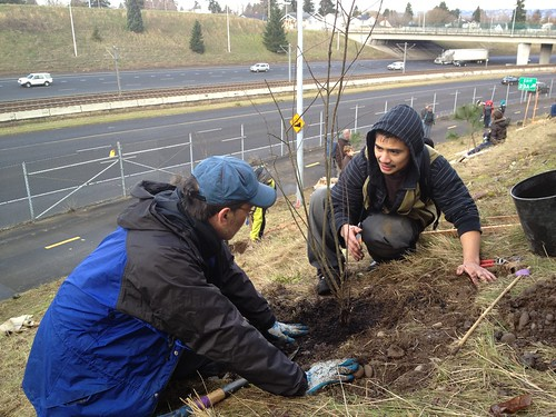 6711514895 95be1c614c More than 550 volunteers plant 2,000 trees to honor Dr. Martin Luther King Jr.