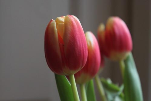 цветы 017