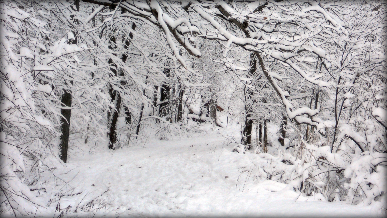 winter-horse1896565399