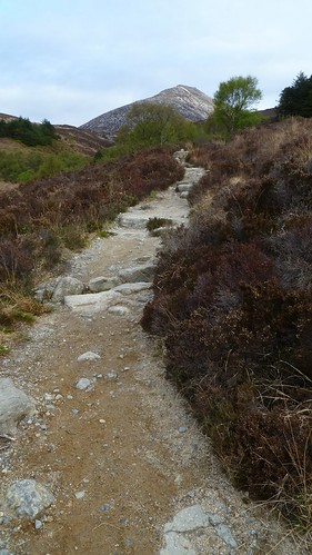 Goatfell Path in Cnocan Wood