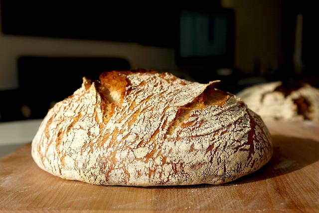 10 coaja no knead