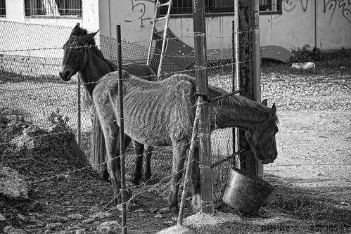 Hambre © by Bakalito (Antonio Benítez Paz)