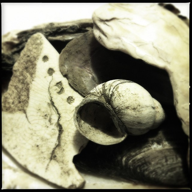 Shards and Shells