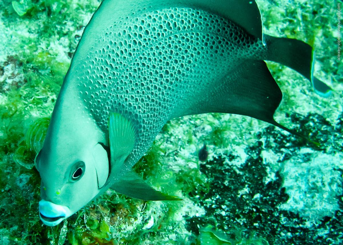 2012.01.12-2012.01.26_dive_safari_[cuba]-diving-017