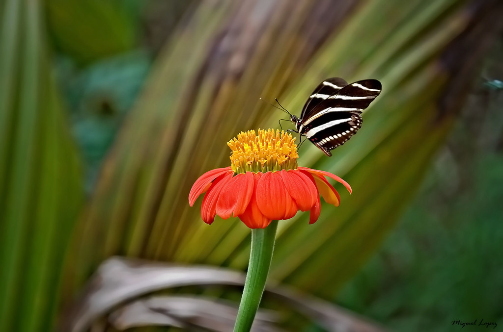 The flower and the butterfly