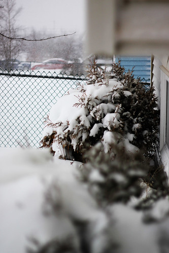 Snowy snowy bushes (191)