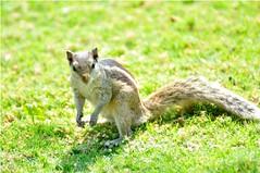 grey fox(0.0), marmot(0.0), animal(1.0), grass(1.0), squirrel(1.0), rodent(1.0), fauna(1.0), chipmunk(1.0), wildlife(1.0),