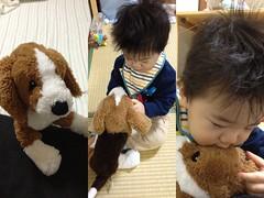朝、ビーグル犬のぬいぐるみと戯れるとらちゃん(2012/2/7)