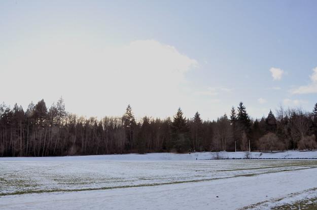 snowy-field