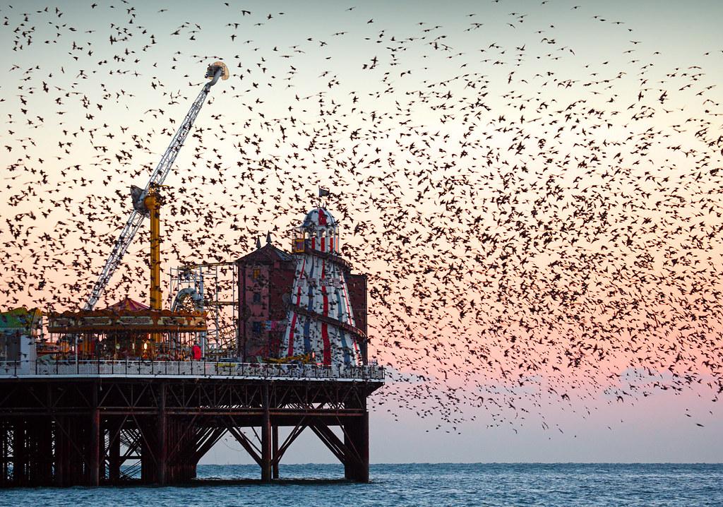 Starling Murmuration, Brighton Pier