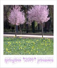 Primavera en los Jardines de Aranjuez