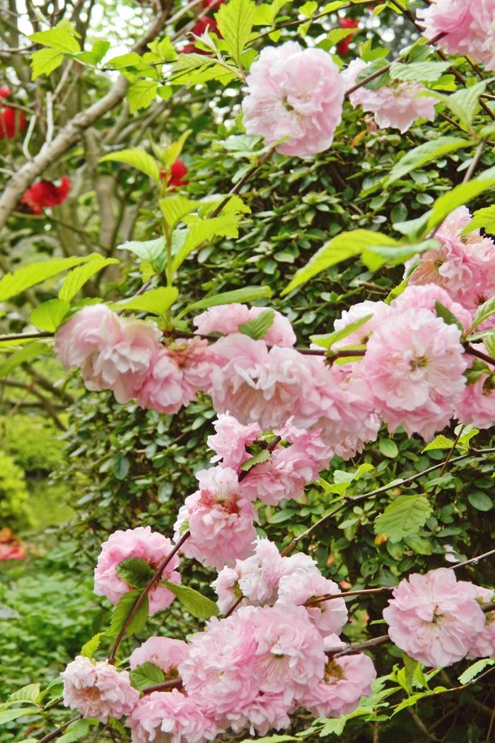 Jardin japonais Albert Kahn (14)