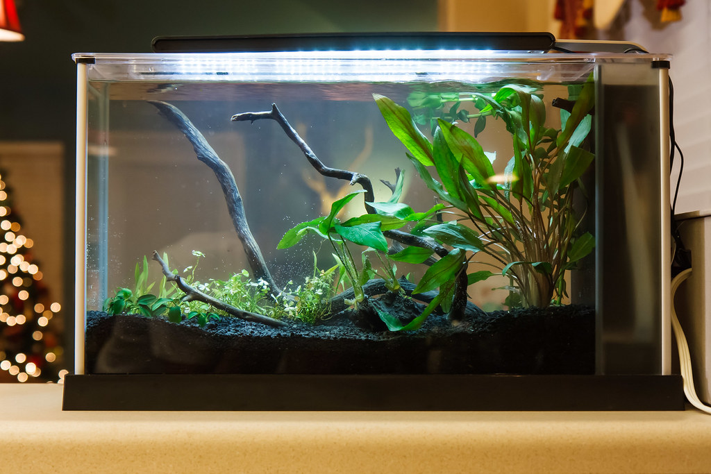 transitioning aquarium plants from emersed to submersed