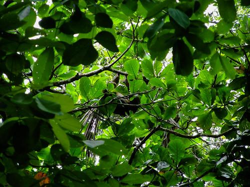 Parc National de Cahuita: notre premier paresseux
