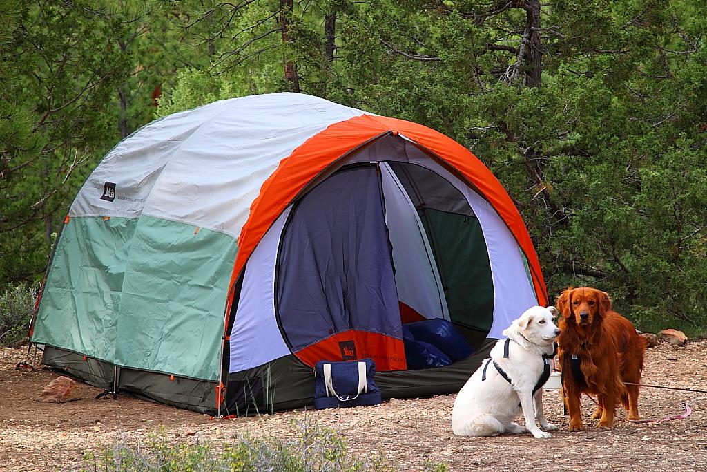 IMG_2847 Camping