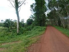 Muddy Trang road