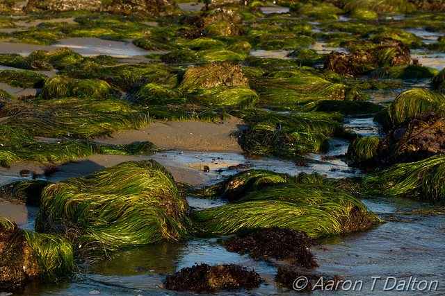 Sea Grass by Gold Light