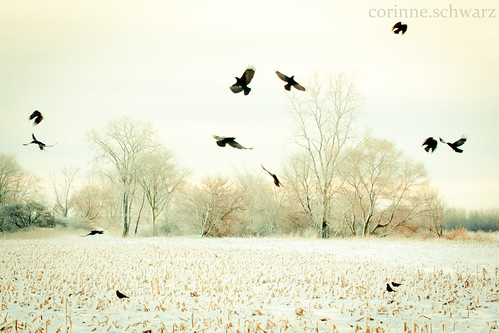 Crows II by corinne.schwarz
